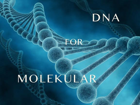 DNA for Molekular