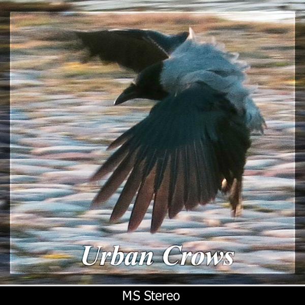 Urban Crows