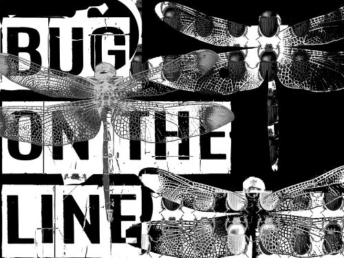 bug on the line percussion sample pack