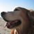 bismark updates bs-16i for iOS to v3.1.1