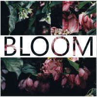 iamlamprey Bloom (Kontakt)